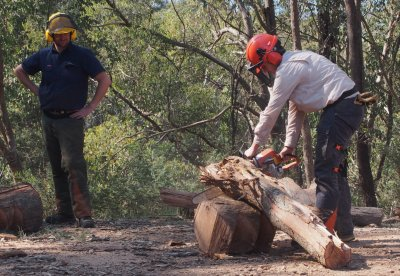 ChainsawCourse pic